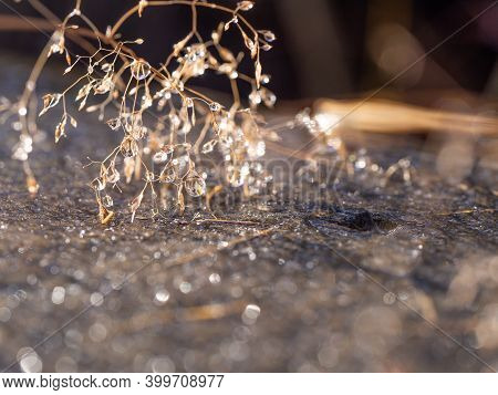 Shining Drops Of Water On Frozen Plant In Cold Winter