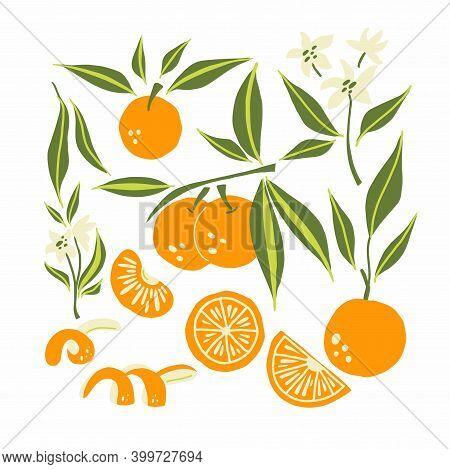 Mandarin Set. Exotic Tropical Orange Citrus Fresh Fruit, Whole Juicy Tangerine With Green Leaves And