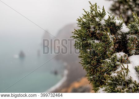 Juniper Branches And Cones Under Snow And Ice, On Overcast Snowy Day. Juniperus Chinensis. Winter Ti