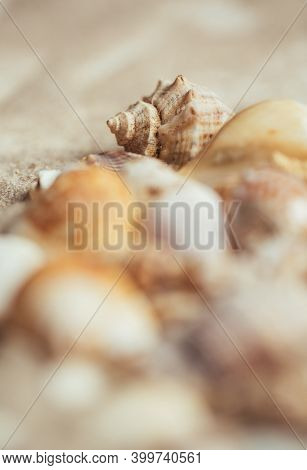 Seashell On The Beach. The Focus Is On The Seashell, The Other Seashells Are Blurred.