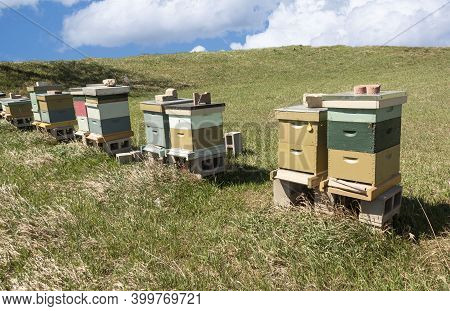 Beehives in meadow during spring are home to many bees that pollinate crops