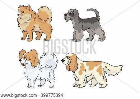 Cute Cartoon Dog Breed Set Vector. Pedigree Kennel Spitz, Papillon And Schnauzer For Dog Lovers. Pur