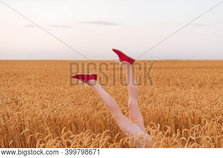 Beautiful Slender Female Legs Sticking Out Of Field Of Ripe Wheat. Gluten Free Concept