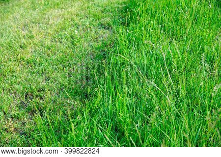 Partially Cut Grass Lawn. Green Fresh Grass. Difference Between Perfectly Mowed, Trimmed Garden Lawn
