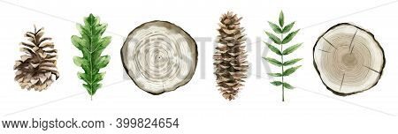 Forest Botanical Elements For Decoration. Summer Tree Decor. Pinecones, Tree Cuts, Oak And Rowan Lea