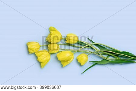 Bunch Of Yellow Tulips On Blue Background With Copy Space. Flat Lay. Top View.