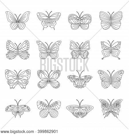 Set Of Black And White Butterflies On White Background, Vector Illustration