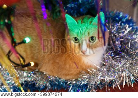 Red-haired Cat Lies Under The Christmas Tree In Decoration.