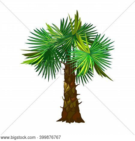 Puffy Green Palm Tree Leaves, Stem With Flakes, Desert Island Plant. Vector Fruitful Tree, Nature, E
