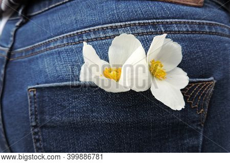 Two Flowers With White Petals And A Yellow Center In The Back Pocket Of Blue Jeans