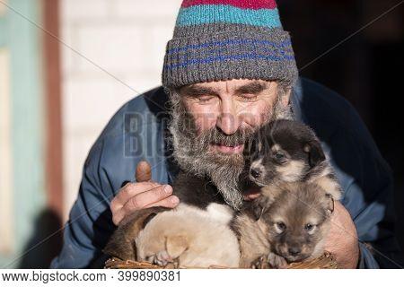 An Elderly Man With Small Puppies. Dog Breeder. Puppy Seller. Dog Kennel.