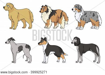 Cute Cartoon Dog Breed Set Vector Clipart. Pedigree Kennel Rough Collie, Golden Retriever For Dog Lo