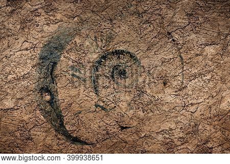 Print Ammonite Fossil Isolated On A Stone Background.trace Of Fossil Spiral Snail. Ancient Mollusc.
