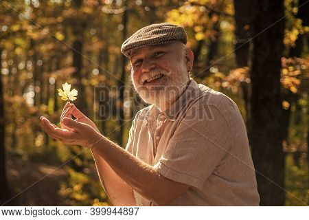 October Is Here Again. Happy Pensioner Collect Leaves On October Day. Senior Man Enjoy October Folia