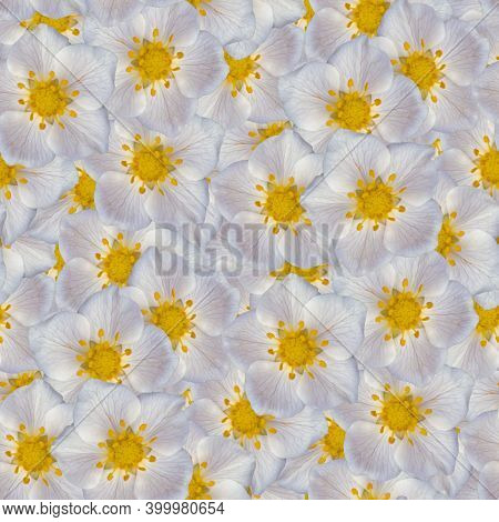 Seamless Flower Pattern Textures. Delicate Strawberry Flowers. Decorative Design Elements