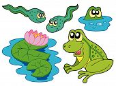 Frog collection on white background - vector illustration. poster