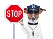 police dog with a street stop sign poster