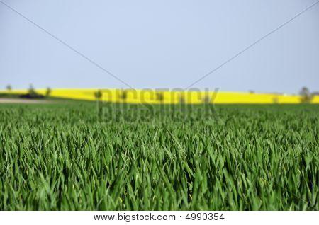 Bio cultivation