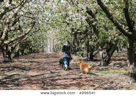 Strolling Through The Orchard