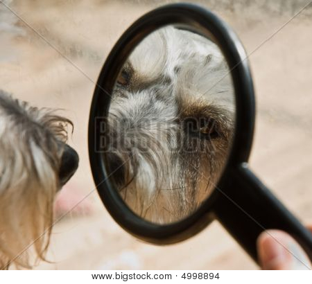 Reflection Of A Dog In A Small Mirror