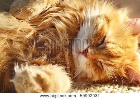 Sleeping Red Cat