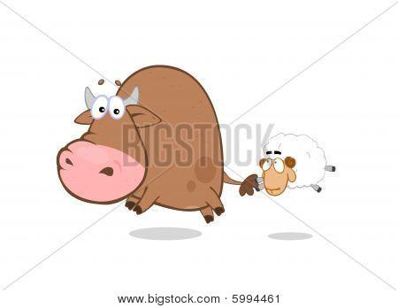 Bull - sheep