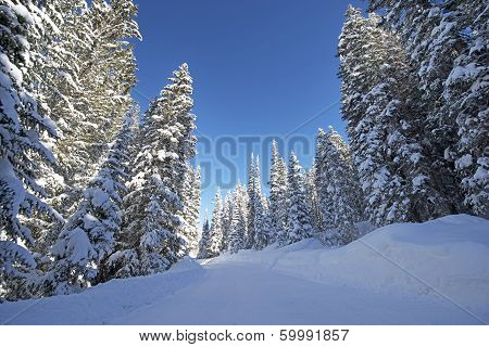 Scenic Winter Forest Road. Snowy Forest Backcountry Road in Colorado United States. poster