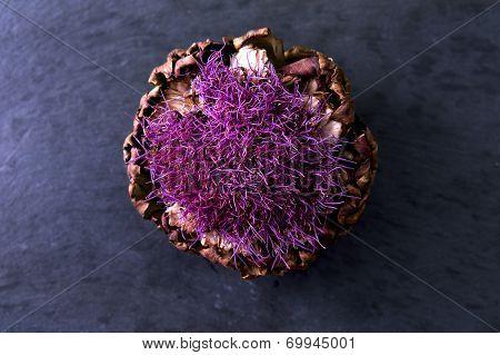 Purple Flowering Artichoke