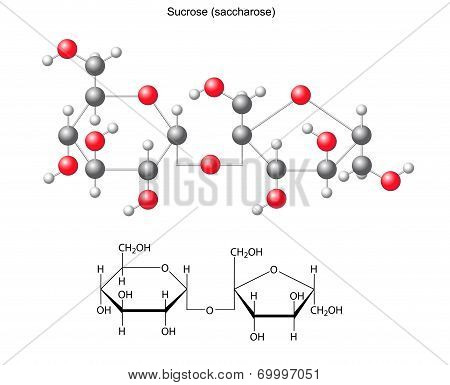 Structural chemical formula and model of sucrose (saccharose), 2D and 3D illustration, vector, isolated on white background, eps8 poster
