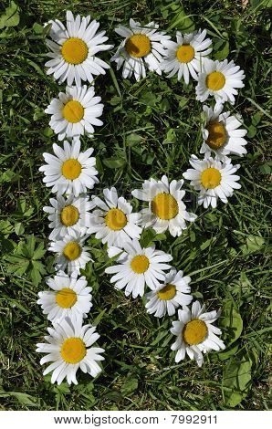 letter of daisies
