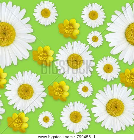 Daisy Flowers Pattern