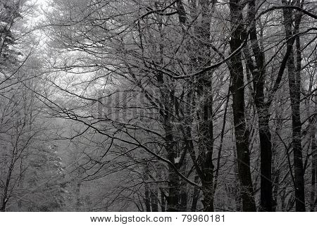 Forest In Snow Detail
