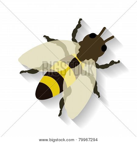 Realistic honey bee isolated on white background. Vector illustration EPS 10.
