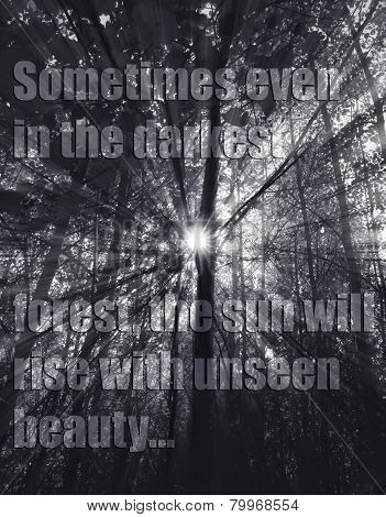 Forest And Quote