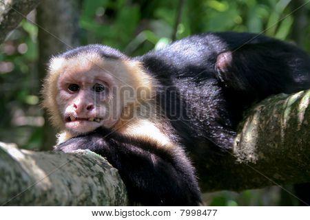 Very Ugly Old Monkey