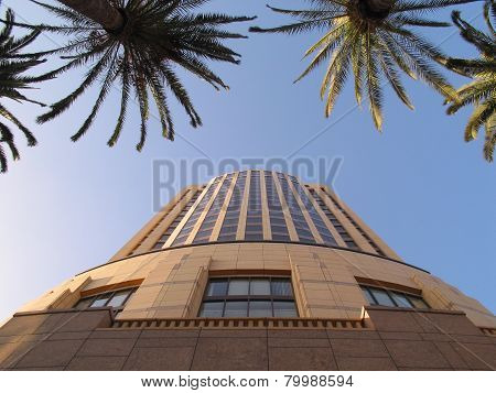 looking up at a building and palm trees
