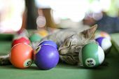 A cat takes a well deserved nap on a pool table surrounded by balls poster