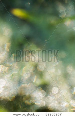Dew Drops Blurred