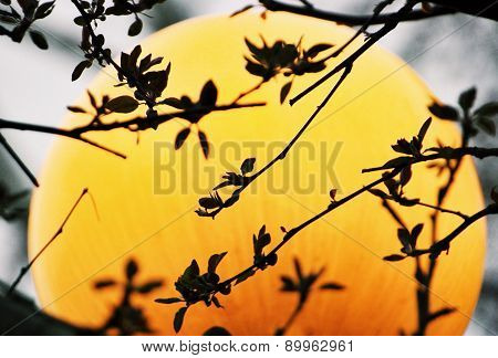 Silhouette leaves