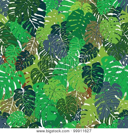 Tropical leaves - Philodendron
