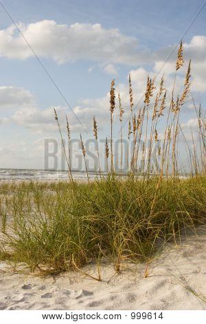 Scenic Beach Scene