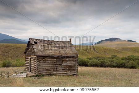 Golden Eagle On An Old Barn.