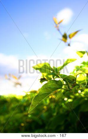Delicate Greenery