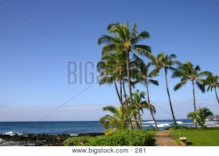 Palm Trees Over Ocean