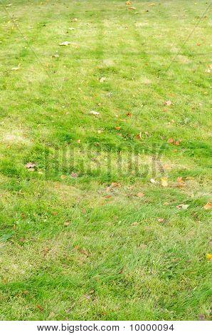 Groen gazon met gevallen bladeren
