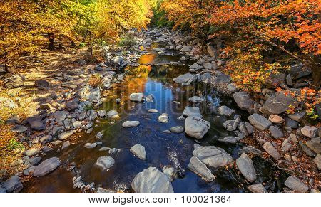 Autumn River With Yellow Leafs