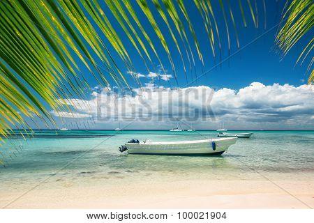 Exotic Beach In Dominican Republic