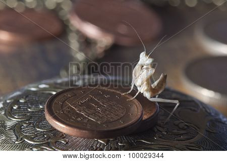 nymph praying mantis comparative coin size