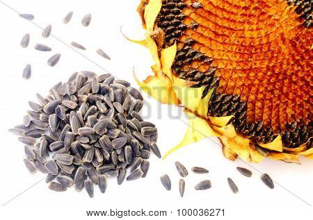 Sunflower and seeds isolated on white closeup