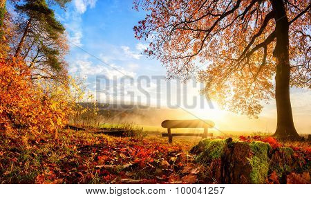 Gorgeous Autumn Scenery